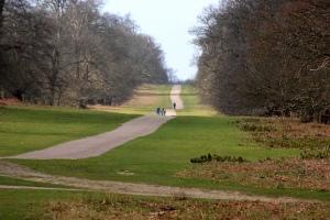 Knole Park 2
