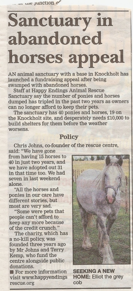 Horse article